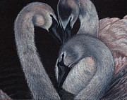 Swans... Drawings - Elegant Whispers by Jo Prevost