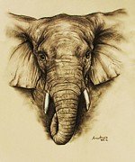 Charcoal Mixed Media - Elephant 2 by Anastasis  Anastasi