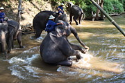 Bathing Art - Elephant Baths - Maesa Elephant Camp - Chiang Mai Thailand - 011315 by DC Photographer