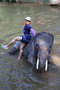 Bathing Photo Prints - Elephant Baths - Maesa Elephant Camp - Chiang Mai Thailand - 011316 Print by DC Photographer