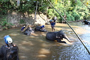 Bathing Photo Prints - Elephant Baths - Maesa Elephant Camp - Chiang Mai Thailand - 011317 Print by DC Photographer