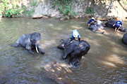 Bath Metal Prints - Elephant Baths - Maesa Elephant Camp - Chiang Mai Thailand - 011318 Metal Print by DC Photographer