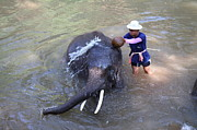 Bathing Art - Elephant Baths - Maesa Elephant Camp - Chiang Mai Thailand - 011324 by DC Photographer