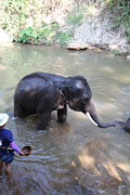 Bath Prints - Elephant Baths - Maesa Elephant Camp - Chiang Mai Thailand - 011328 Print by DC Photographer