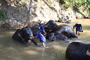 Bath Photo Framed Prints - Elephant Baths - Maesa Elephant Camp - Chiang Mai Thailand - 011329 Framed Print by DC Photographer