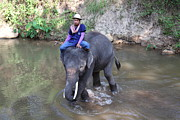 Camp Photos - Elephant Baths - Maesa Elephant Camp - Chiang Mai Thailand - 01133 by DC Photographer