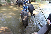 Bath Prints - Elephant Baths - Maesa Elephant Camp - Chiang Mai Thailand - 01137 Print by DC Photographer