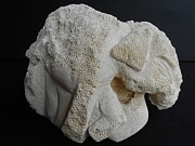 Shore Sculptures - Elephant Child by David Francis Willis