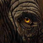 Elephant Eye Print by Jurek Zamoyski