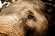 Tibetan Buddhism Prints - Elephant eye Print by Raimond Klavins