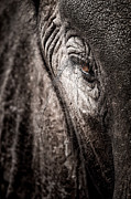 Rhinocerus Prints - Elephant Eye Verical Print by Mike Gaudaur