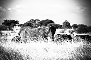 Travel - Tanzania - Elephant Family in the Grass BW by Darcy Michaelchuk