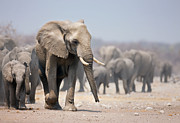 Elephant Feet Print by Johan Swanepoel