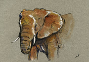Nature Study Painting Posters - Elephant head african Poster by Juan  Bosco