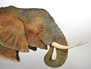 Nature Study Painting Posters - Elephant head study Poster by Juan  Bosco