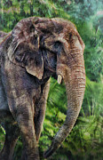 Big Ears Framed Prints - Elephant Framed Print by Kathy Jennings