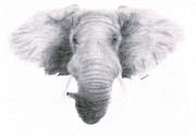Lucy D Drawings Metal Prints - Elephant Metal Print by Lucy D
