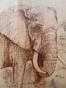 Tusk Pyrography Prints - Elephant Print by Manon  Massari
