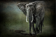 Tusk Photo Prints - Elephant On The Rocks Print by Mike Gaudaur