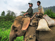 Two Wheeler Photo Prints - Elephant Rides Print by James Wheeler