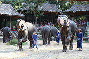 Elephants Prints - Elephant Show - Maesa Elephant Camp - Chiang Mai Thailand - 011310 Print by DC Photographer