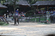 Elephants Metal Prints - Elephant Show - Maesa Elephant Camp - Chiang Mai Thailand - 011327 Metal Print by DC Photographer