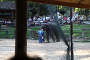 Elephants Prints - Elephant Show - Maesa Elephant Camp - Chiang Mai Thailand - 011343 Print by DC Photographer