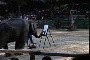 Show Framed Prints - Elephant Show - Maesa Elephant Camp - Chiang Mai Thailand - 011344 Framed Print by DC Photographer