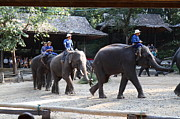 Elephants Prints - Elephant Show - Maesa Elephant Camp - Chiang Mai Thailand - 01137 Print by DC Photographer
