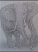 Pencil On Canvas Metal Prints - Elephant up Close Metal Print by Melissa Nankervis