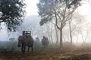 Elephant Framed Prints - Elephants At Chitwan Framed Print by Robert Preston