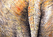 Fauna Drawings Originals - Elephants Bottom by Daniel Janda