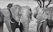 Elephants Drawings - Elephants by Kimberly Burkhardt