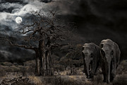 Moonlit Night Framed Prints - ELEPHANTS of the SERENGETI Framed Print by Daniel Hagerman