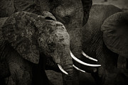 Pekka Jarventaus - Elephants of Tsavo East