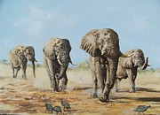 Robert Teeling - Elephants
