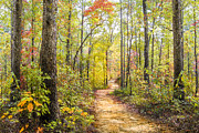 Autumn Scenes Art - Elfin Forest by Debra and Dave Vanderlaan