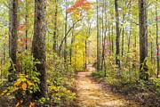 Elfin Forest Print by Debra and Dave Vanderlaan