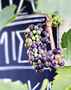 Purple Grapes Prints - Elixir of life Print by Ivy Ho
