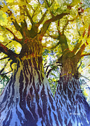 Artist Watercolor Prints - Elizabeths Canopy Print by Kris Parins