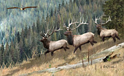 Elk Paintings - Elk Art - Band of Brothers by Elk Artist Dale Kunkel
