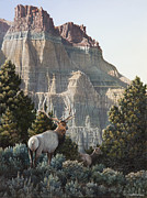 Juniper Paintings - Elk at Cathedral Rock by Mike Stinnett