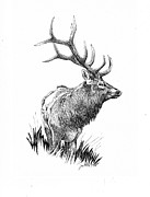 Rack Drawings - Elk by Barbara Lightner