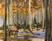 Fall Grass Prints - Elk in the Gold Print by Jeff Brimley