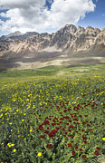 Grass Art - Elk Mountain Wildflowers by Aaron Spong