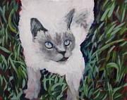 Siamese Cat Print Framed Prints - Ellie Caught Framed Print by Katrina West