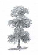 Alan Daysh - Elm Tree Drawing Number...