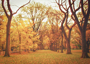 Elm Trees - Autumn - Central Park Print by Vivienne Gucwa
