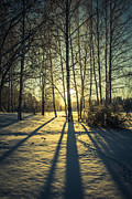 Elongated Shadows Prints - Elongated Print by Matti Ollikainen