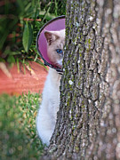 Cat Paw Print Posters - Embarrassed Kitty - Cat Hiding Behind Tree Poster by Ella Kaye
